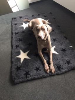 Hundedecke grau 160 x 100cm